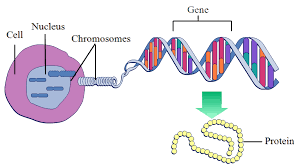 cell-nucleus-dna-gene